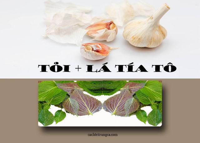 trị mụn thịt bằng lá tía tô và tỏi
