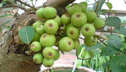 Co-ai-tri-mun-bnag-nhua-sung-chua-a-2