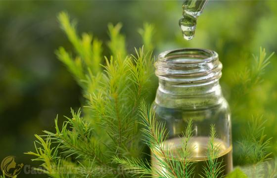 Tinh dầu tràm trị mụn và vết thâm