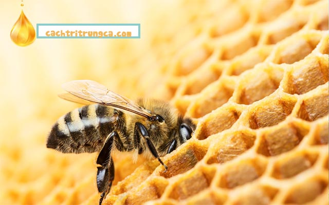 Dùng mật ong chữa thâm mụn hiệu quả tại nhà